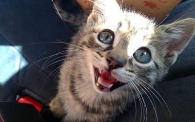 Adopting Mica the happy kitten