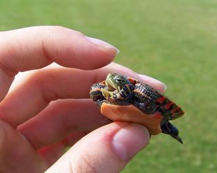 I am a vicious turtle by WeirdBugLady