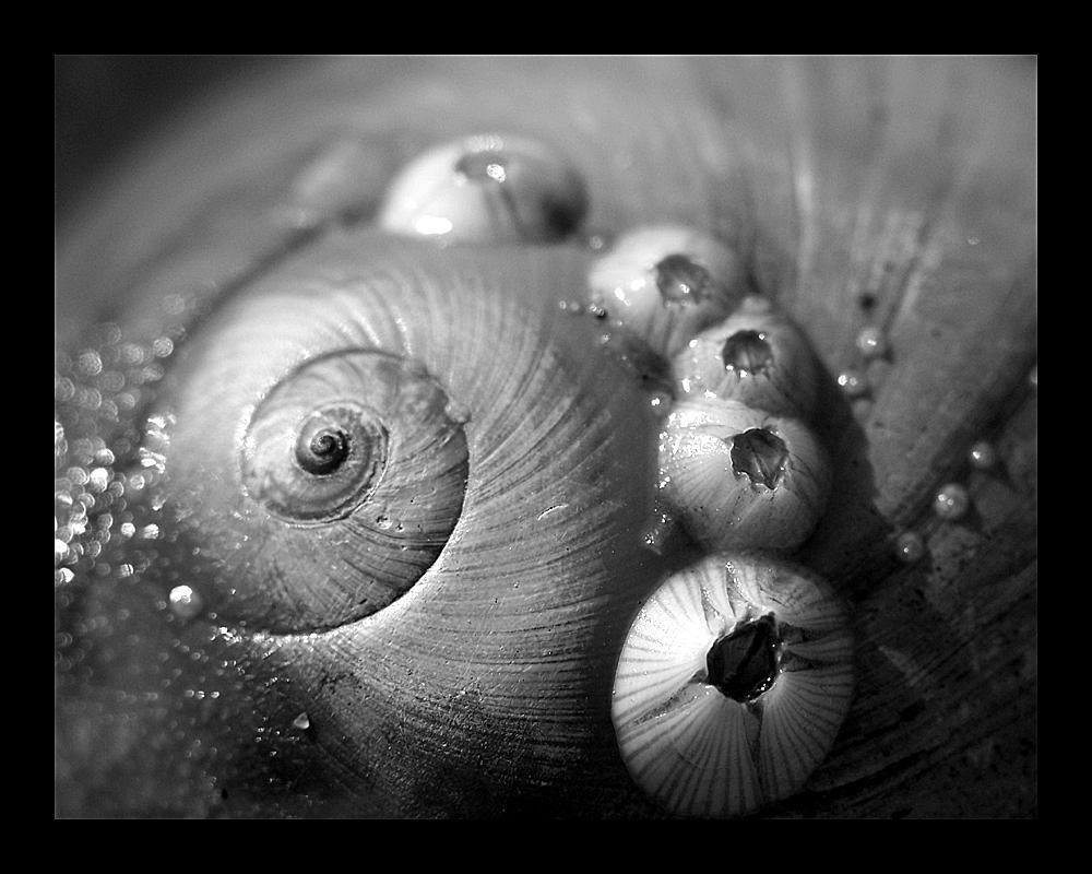 mmmm barnacles by WeirdBugLady