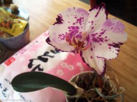 Orchid by flyingpeachbun