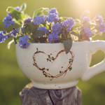 a cup of forget-me-not tea