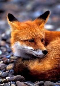The-orange-fox's Profile Picture