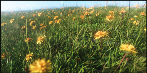 FlowerField by Florinmocanu