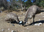 Emu Stock 3 by Stockopedia