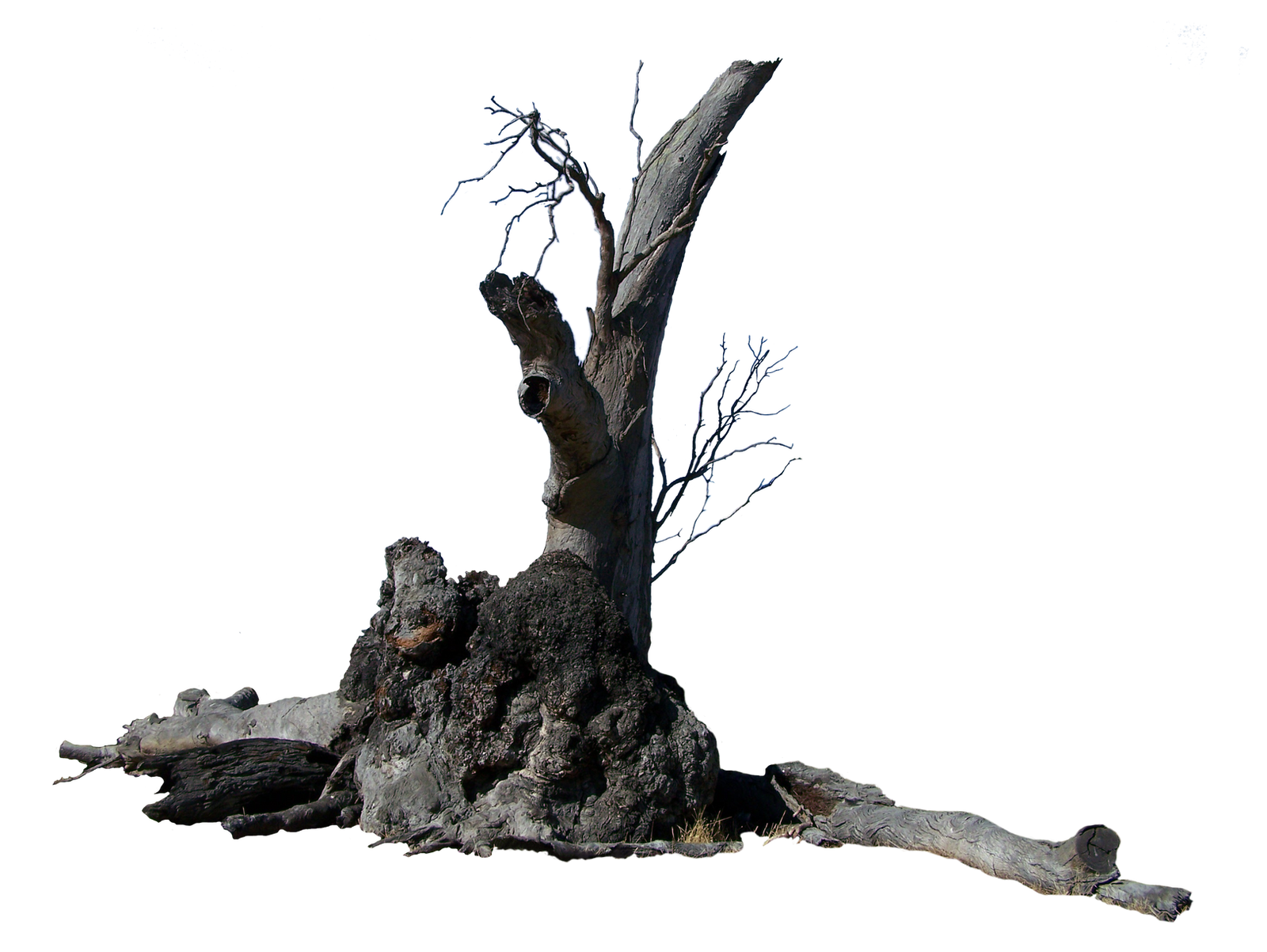 Lightning Tree Precut by Stockopedia