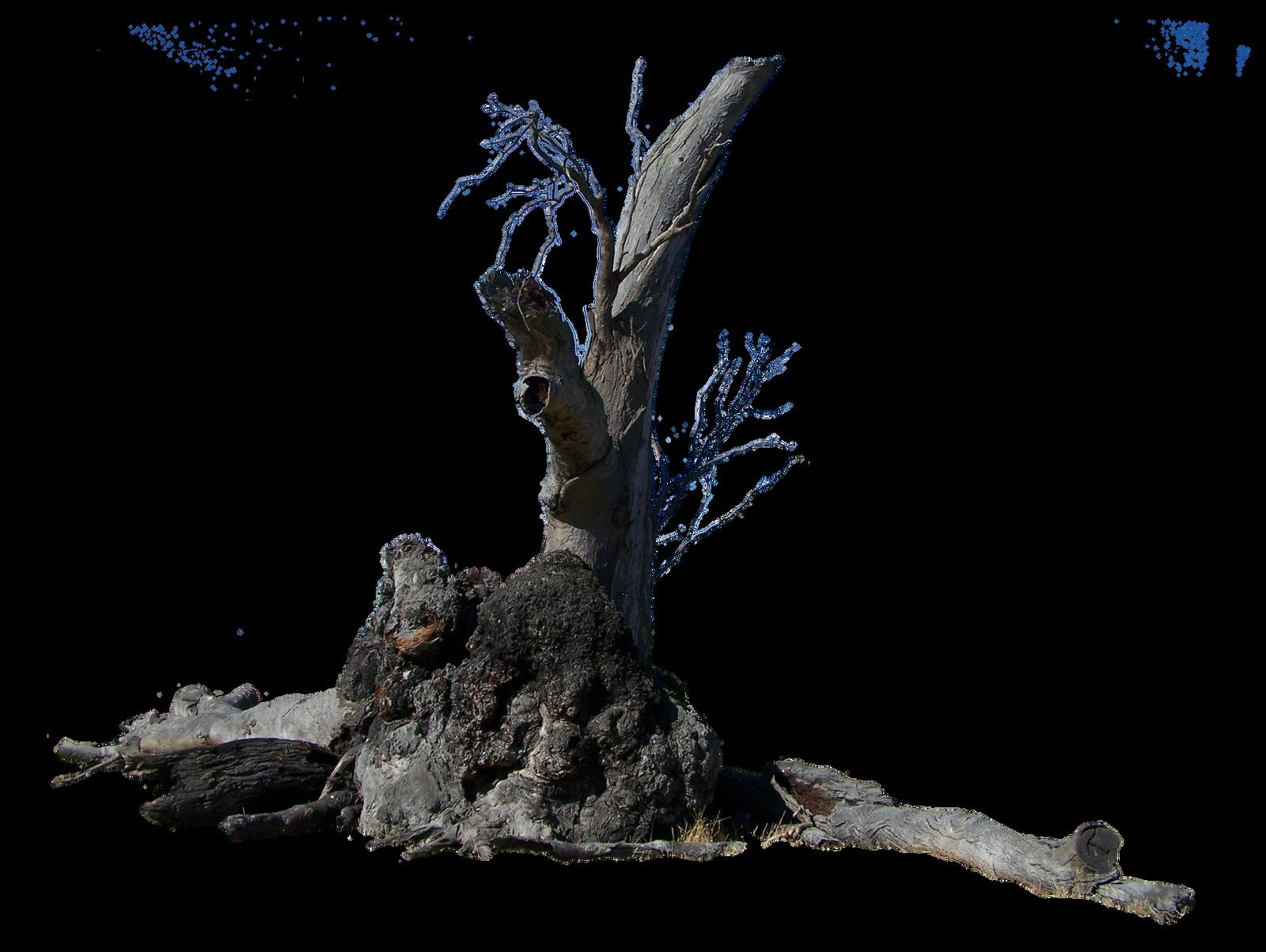 Lightning Tree Precut