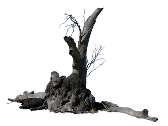 Lightning Tree Precut by Stockopedia
