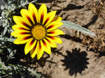 Yellow Flower Stock by Stockopedia