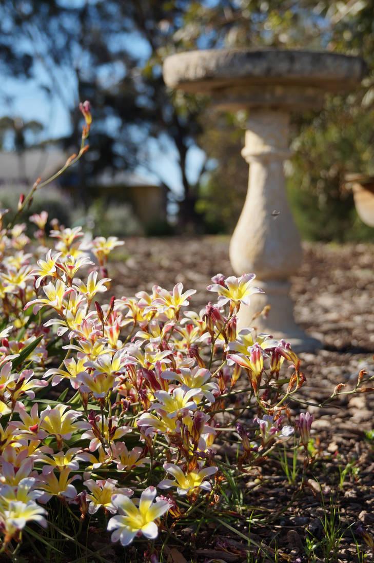 Spring Garden Stock 1