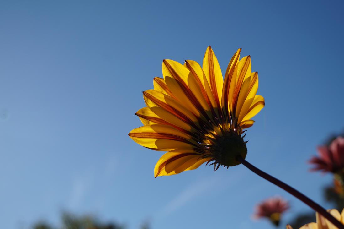 Wildflower Stock 1 by Stockopedia