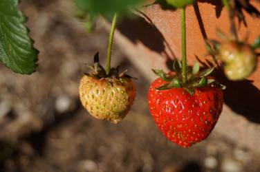 Strawberry Stock 1 by Stockopedia