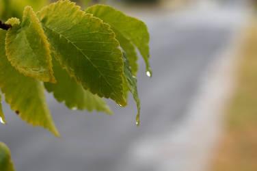 Leaf Drip Stock 2 by Stockopedia
