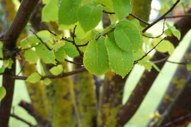 Leaf Drip Stock 1 by Stockopedia