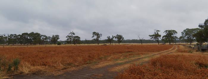 Australian Farm Panorama Stock