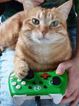 Video game cat Timmi