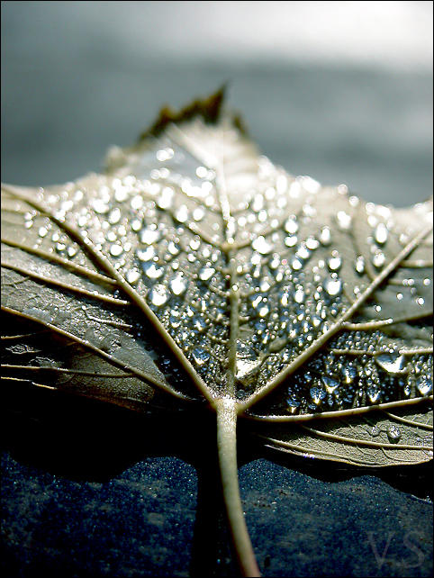 Rain by TheTragicTruth-Of-Me