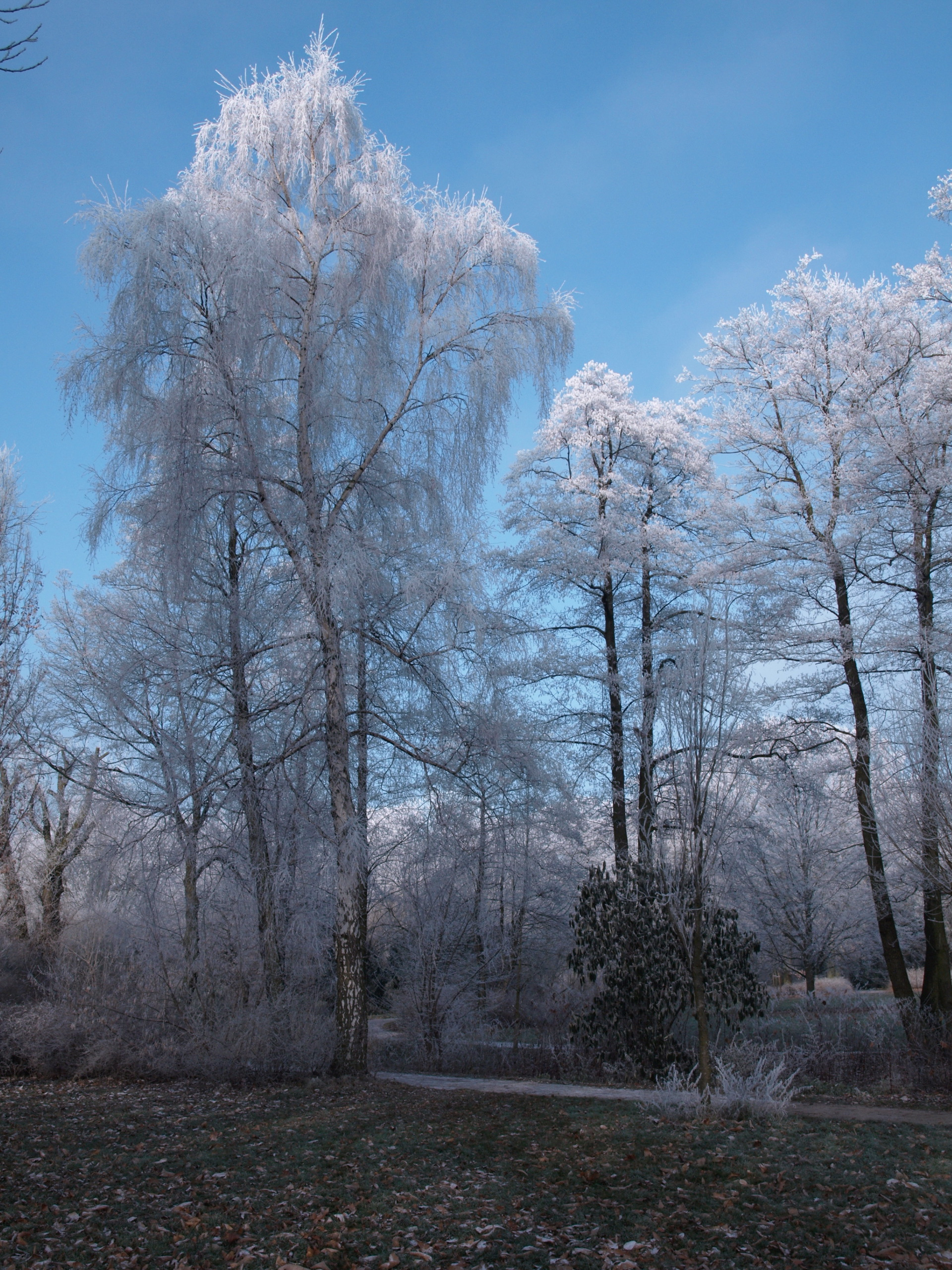 STOCK Winter by Inilein