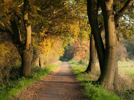 STOCK autumn forest by Inilein