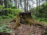 STOCK Stump