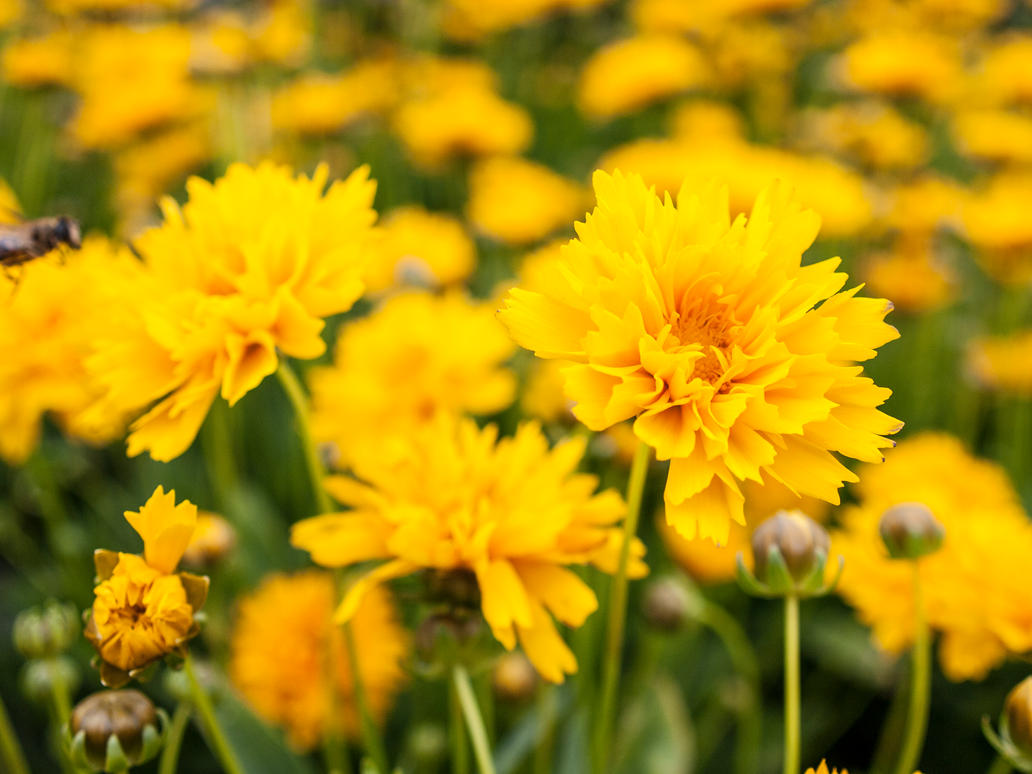 STOCK Yellow flowers 2 by Inilein