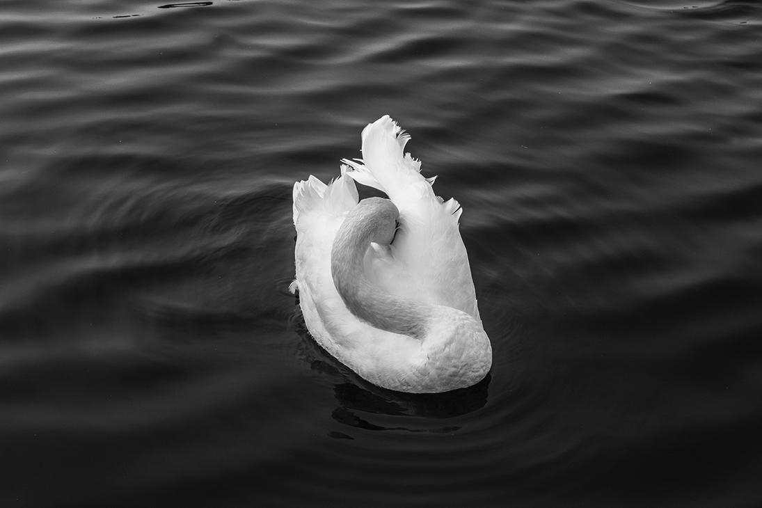 Swan by Inilein