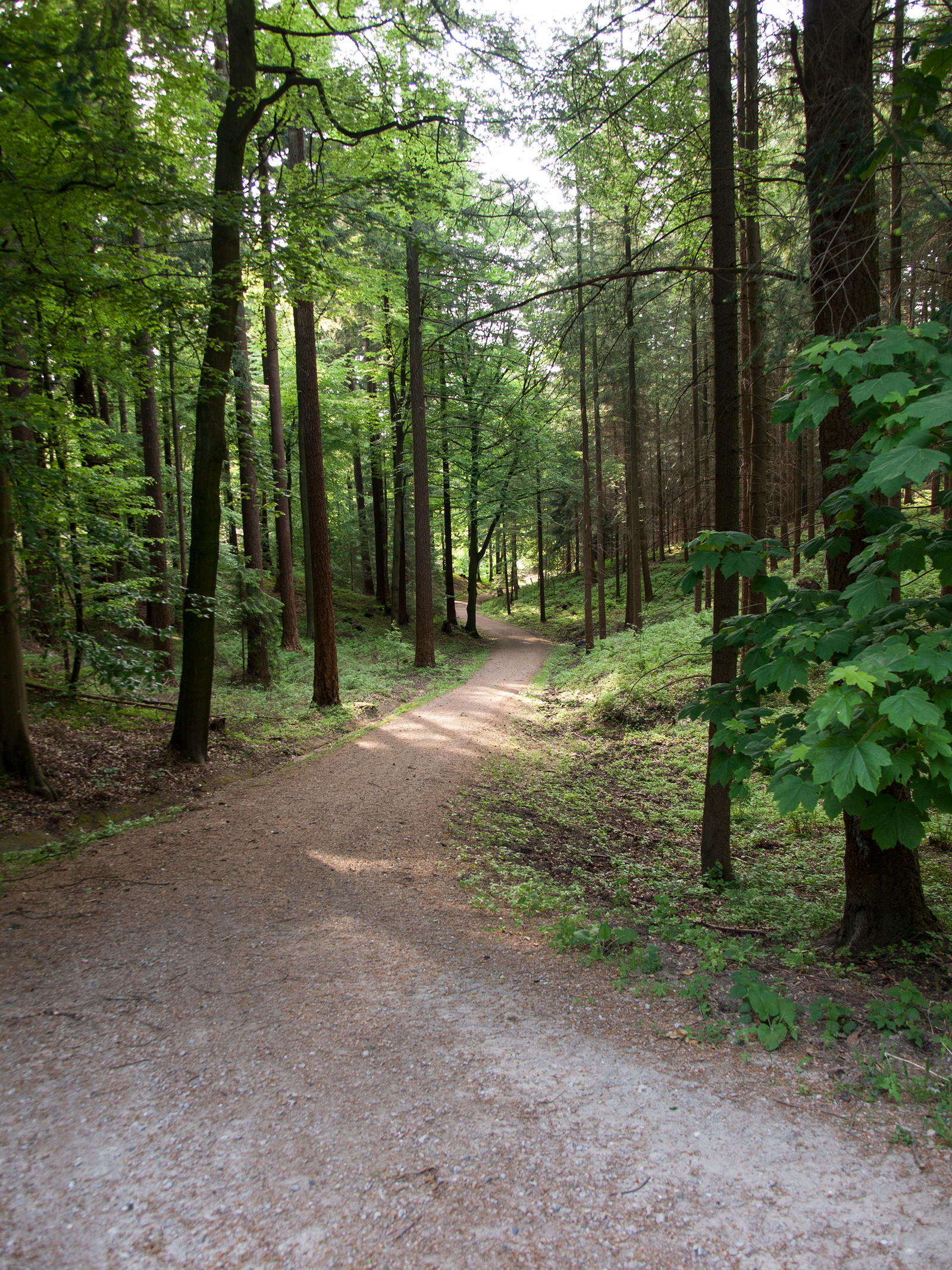 STOCK Forest5 by Inilein