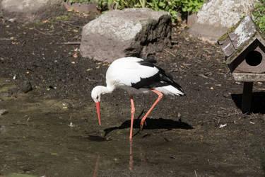 STOCK Stork