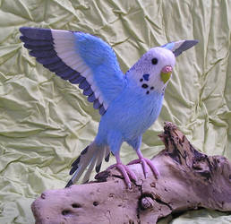 budgerigar by ellis-animals