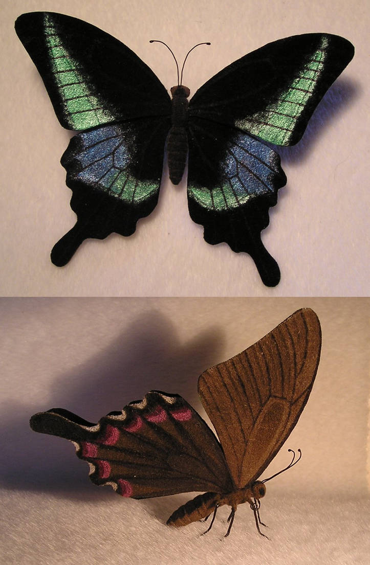 Butterfly by ellis-animals