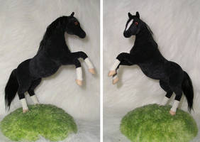 black horse by ellis-animals
