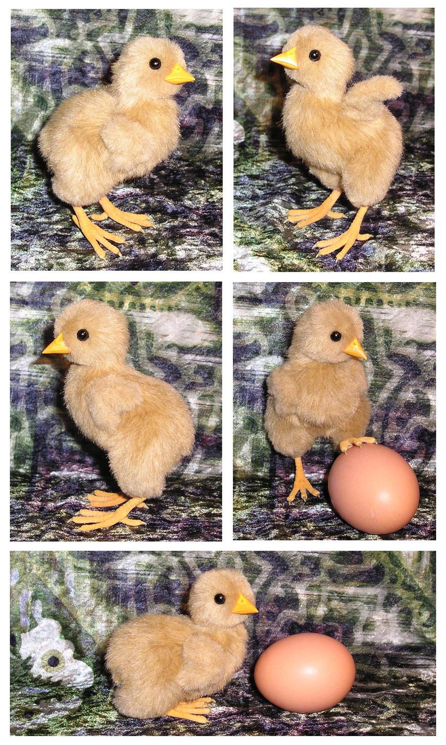 Chick by ellis-animals