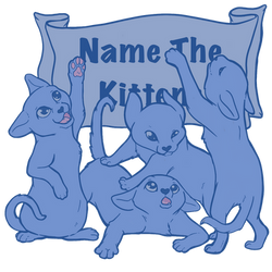 Funds for the Kitties