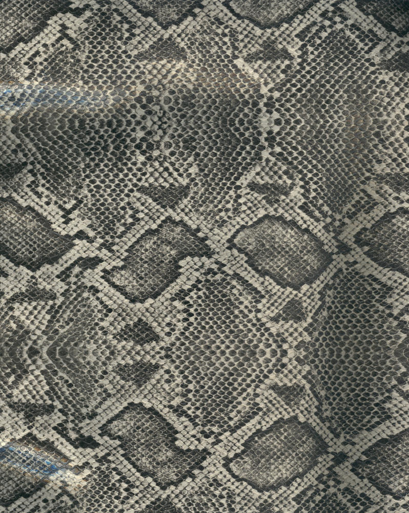 Snake skin - gray and black by paintresseye
