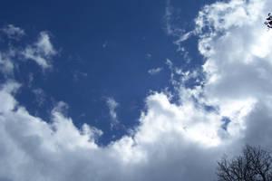 Cloud fluff slight tree branch