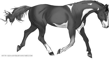 Trotting by katdawg13