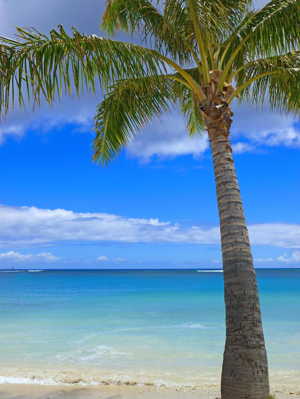 ... coconut palm tree clip art coconut palm tree flower coconut palm tree
