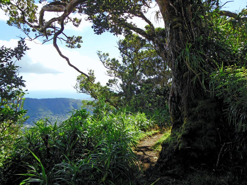 Hawaiian Hiking Trail by joeyartist