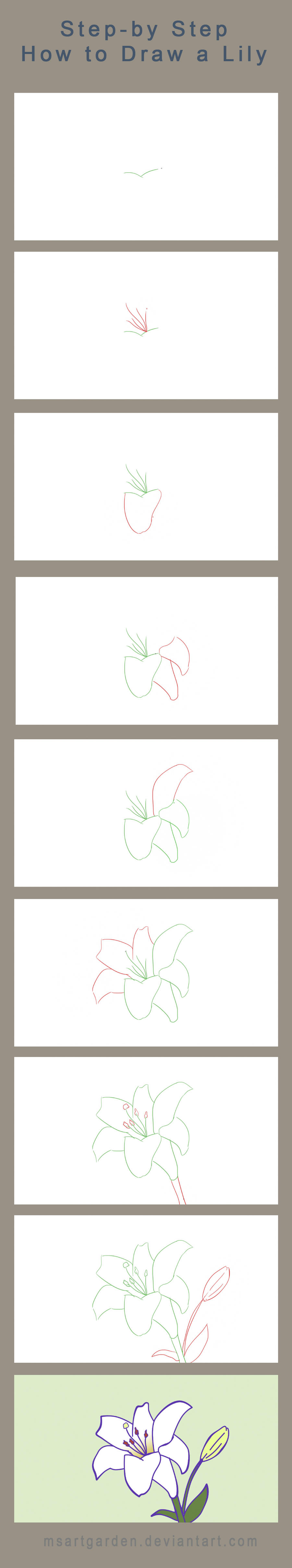 Step By Step How To Draw A Lily By Msartgarden On Deviantart