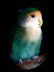 Lovebird 2 by Makii-17