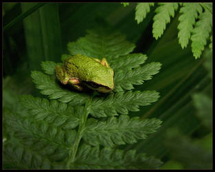frog by natronics