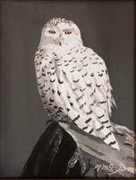Snowy Owl by kdrmickey