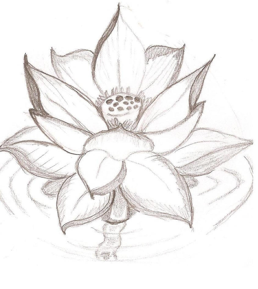 Lotus flower by caityleelove on deviantart lotus flower by caityleelove mightylinksfo