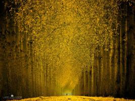 Cycle in Gold by LarsVanDeGoor