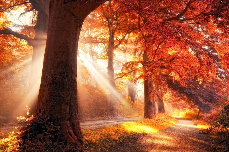 fall on fire by LarsVanDeGoor