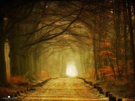 Path of Many by LarsVanDeGoor