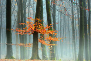 Last Leaves II by LarsVanDeGoor