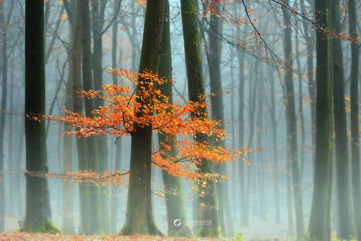 Last Leaves II