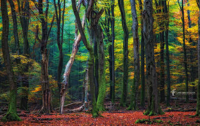 Speulder Forest
