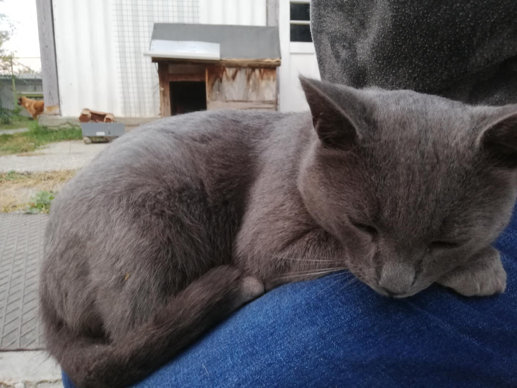 Vihar sleeping on my leg by FaraWolfdog