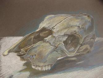 Animal Skull (Grey)